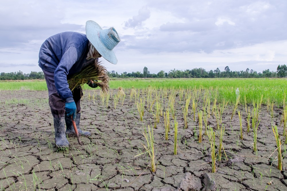 Natural disasters in Asia caused $48 billion worth of damage to agriculture in 2017