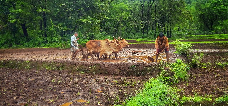 World Bank announces new climate resilience plans to benefit 25 million in India