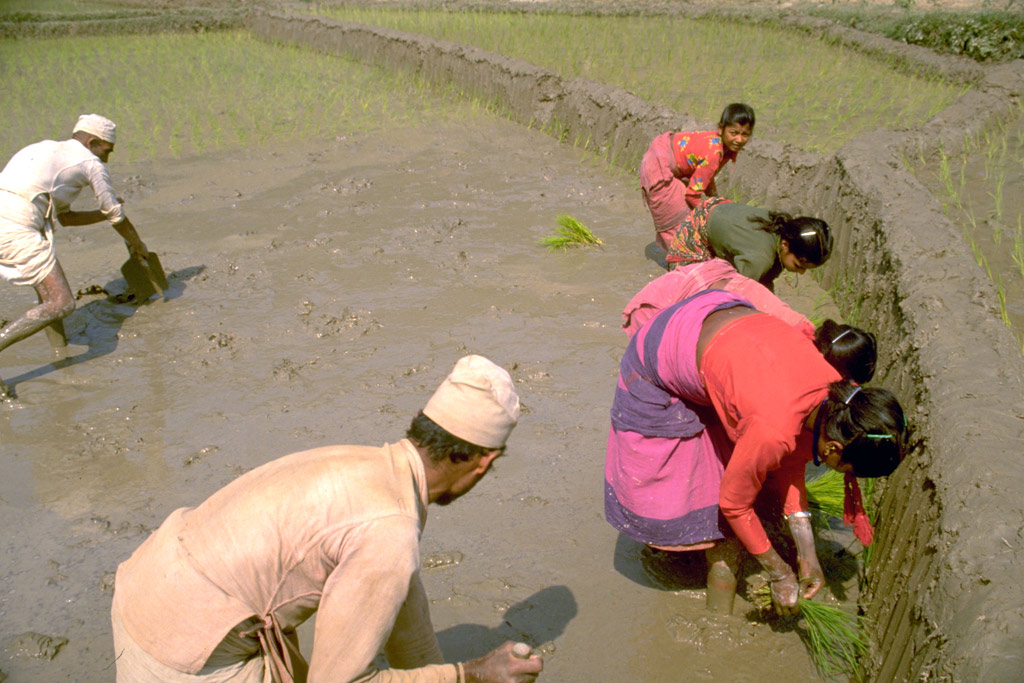 New UN project set to benefit 14,000 Nepalese farmers